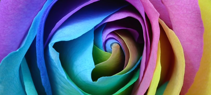 diy die rainbow rose zum selbemachen auf unserem blog. Black Bedroom Furniture Sets. Home Design Ideas