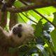 Costa Rica – Kleines Land ganz groß