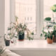5 pflegeleichte Zimmerpflanzen