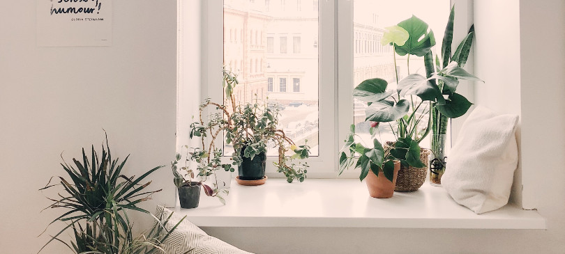 5 Pflegeleichte Zimmerpflanzen Trendraider Nachhaltige Lifestyle