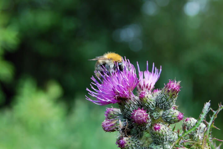 Saatgut Manufaktur Insekten