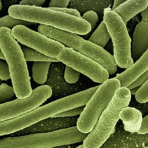 trendraider_e_coli_bakterien_Kosmetikinhaltsstoffe