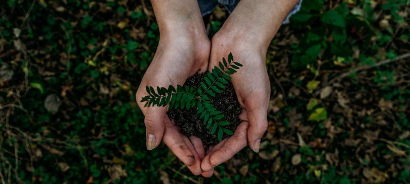nachhaltig leben mit natürlichen Produkten