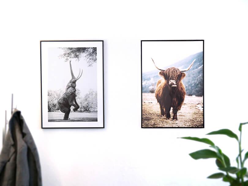 Desenio Wandbilder Elefant und Highland Kuh im Rahmen