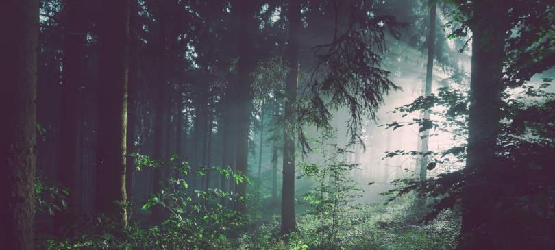 Playlist Feel the Forest TrendBox September