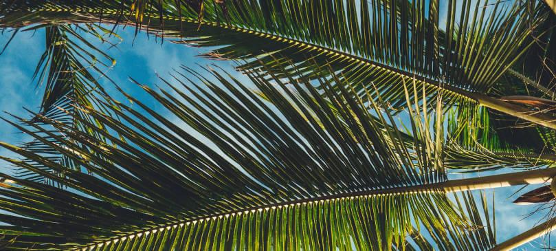Junes Tropical Vibes