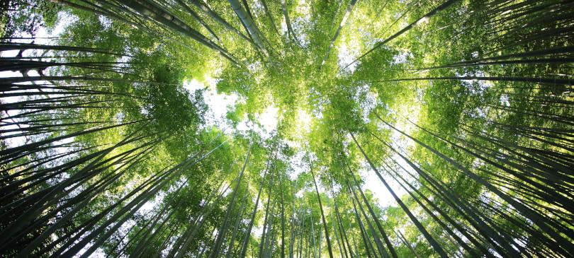 Nachhaltigkeit Entwicklung