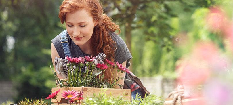 Biotaurus Pflanzenaktivator
