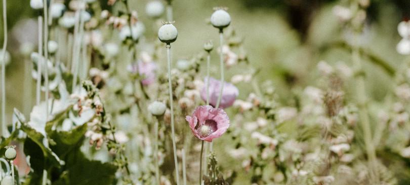 Saatgut Manufaktur Blumen
