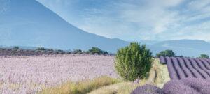 Panier des sens Provence