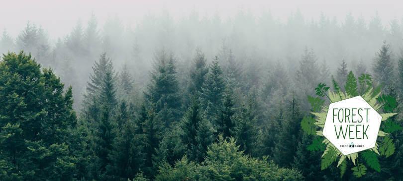 bäume pflanzen mit trendraider