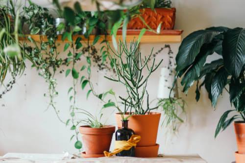 Raumklima verbessern mit Pflanzen