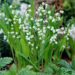 floriaemilia